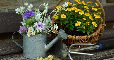 Kwiaty w konewce i koszu